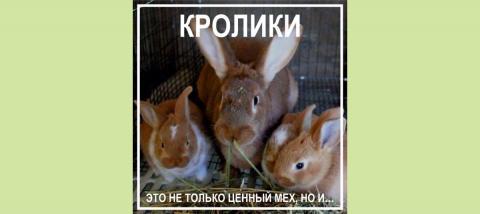 Торговый дом «ФЕРМЕР»: Крольчатина