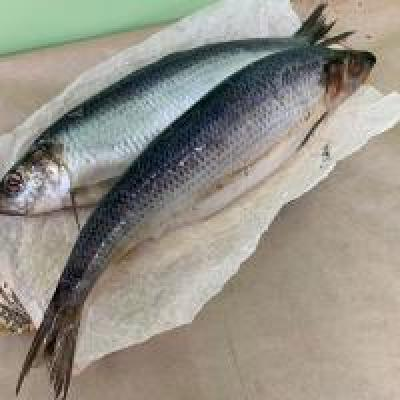 Торговый дом «ФЕРМЕР»: Рыба